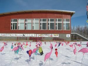 fairbanks joke humor pink flamingos public domain