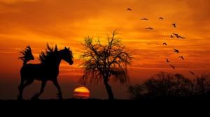 horse-public-domain
