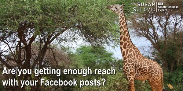 boost small business facebook organic reach